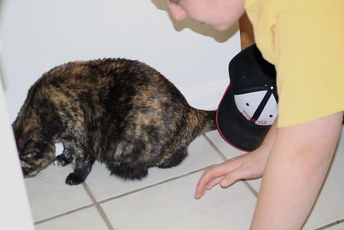 hexbug-cat2