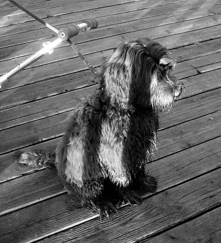 Ewok on the boardwalk