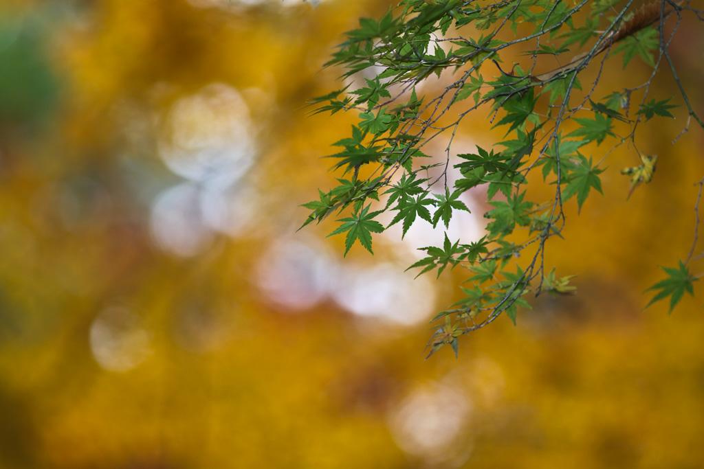 IMAGE: http://farm3.static.flickr.com/2689/4241349475_fa9fcd34c4_o.jpg