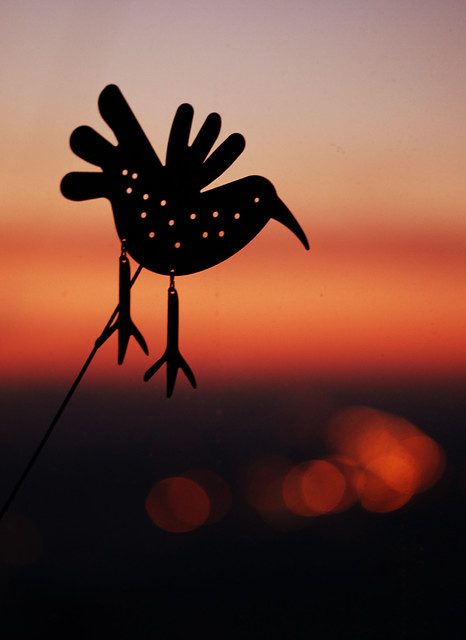 Sunset and The Bird