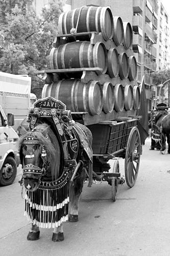 beer-horse