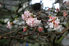 Witt Winter Garden