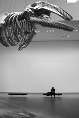 woman sitting at MoMA (jaaaney) Tags: new york bw gabriel skeleton moma whale orozco