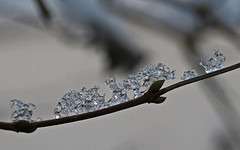 IJskristal (Roelie Wilms) Tags: winter snow ice sneeuw cristal kristal ijs sneeu ijskristal icecristal