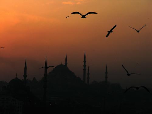 4328771198 06abdc023b Hogyan fotózzunk sirályt Isztambulban?