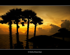 Sunset @ Phuket (DolliaSH) Tags: ocean trip travel trees light sunset sea vacation sky orange sun holiday color tourism sol colors sunrise canon thailand atardecer photography lights soleil photo zonsondergang topf50 asia southeastasia tramonto foto tour sonnenuntergang place photos bangkok silhouettes kingdom tailandia paisaje visit location tourist thalande palm journey thai destination traveling phuket sole visiting siam sonne topf100 fareast thailandia touring coucherdesoleil tailand puestadelsol zakat thaimaa thajsko constitutionalmonarchy southeasternasia canoneos50d solntse dollia dollias sheombar dolliash subregionofasia