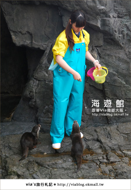 【via關西冬遊記】世界最大極的水族館~大阪海遊館9
