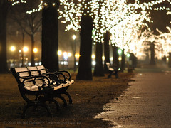 Commonwealth Bench (Mike Cialowicz) Tags: park trees light tree wet beautiful rain boston night dark bench ma prime lights bay back chair nikon dof bokeh empty massachusetts christmaslights ave micro seating avenue holidaylights f28 backbay vr emptyness commonwealthave commave comm bostonist 105mm d90 nikkor105mmf28gvrmicro