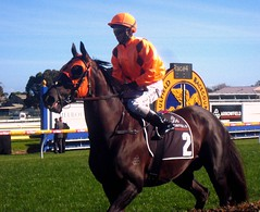 Pinnacles (osedgman) Tags: horse racetrack race fast australia melbourne jockey chestnut horseracing turf racehorse thoroughbred equine gallop caulfield