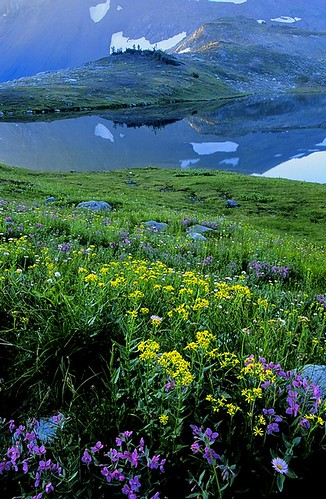 Russet Lake and Wild Flowers at Dawn