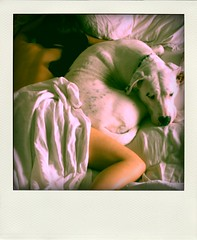 Sleeping Beauties (kingpinphoto) Tags: oliver sleepingin 2010 whitedog whitesheets fakepolaroid lightfoot imawesome joeldidriksen wwwkingpinphotocom promoshoot poladroid strobemagic wwwfacebookcomhellolightfoot