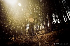 Rays (Lovell D'souza) Tags: trees sunlight rays himalayas harshil