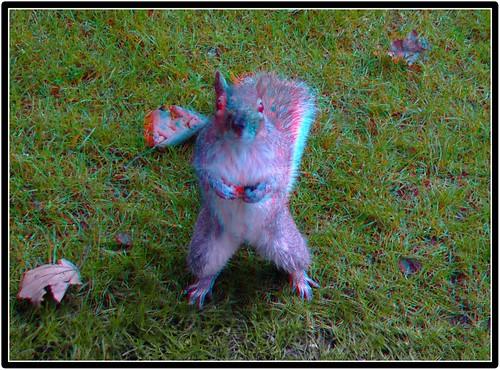 3d red-blue anaglyph Squirrel Kensington Park ...