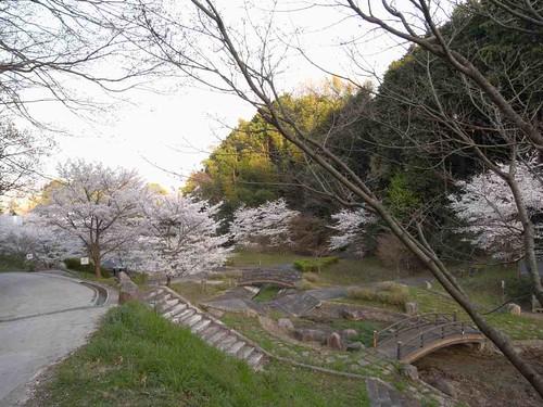 <桜>当麻寺奥の公園-06