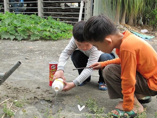 灌蟋蟀28-2010.04.05