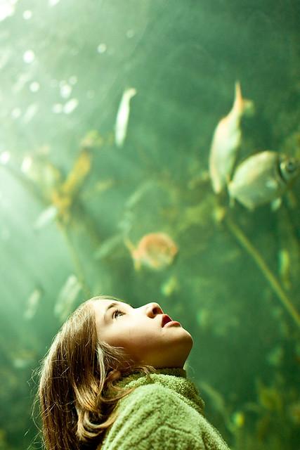365:98 Aquarium