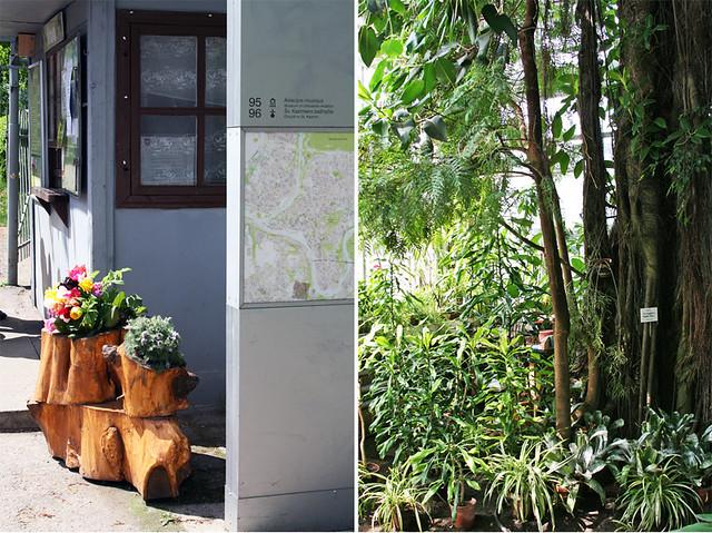 Botanikos sodas2