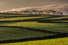 Trees and Fields (Peter Quinn1) Tags: derbyshire peakdistrict limestone whitepeak drystonewalls walls morning sunlight shadows fields trees lineoftrees litton