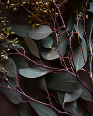 eucalyptus 31 (L. Grainne) Tags: eucalyptus plantleaves lupengrainne foliage californiaplant