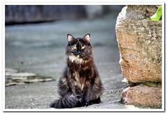 La vera.12 (Cotallo-nonocot) Tags: gato felinos texturas geotagging filtros lavera barrado comarcadelavera cotallo nonocot pueblodebarrado barradoturismo