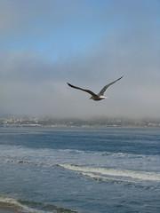 Ocean waves seagull