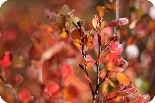 autumn2-09
