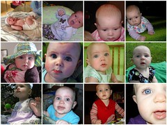 12 Months of Lily Pie!