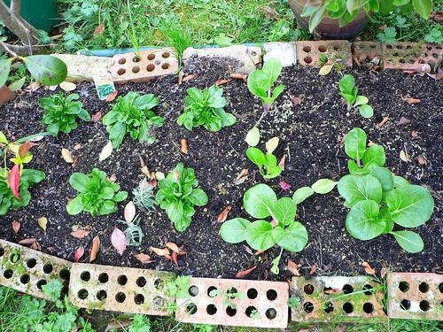 Easy instant garden beds
