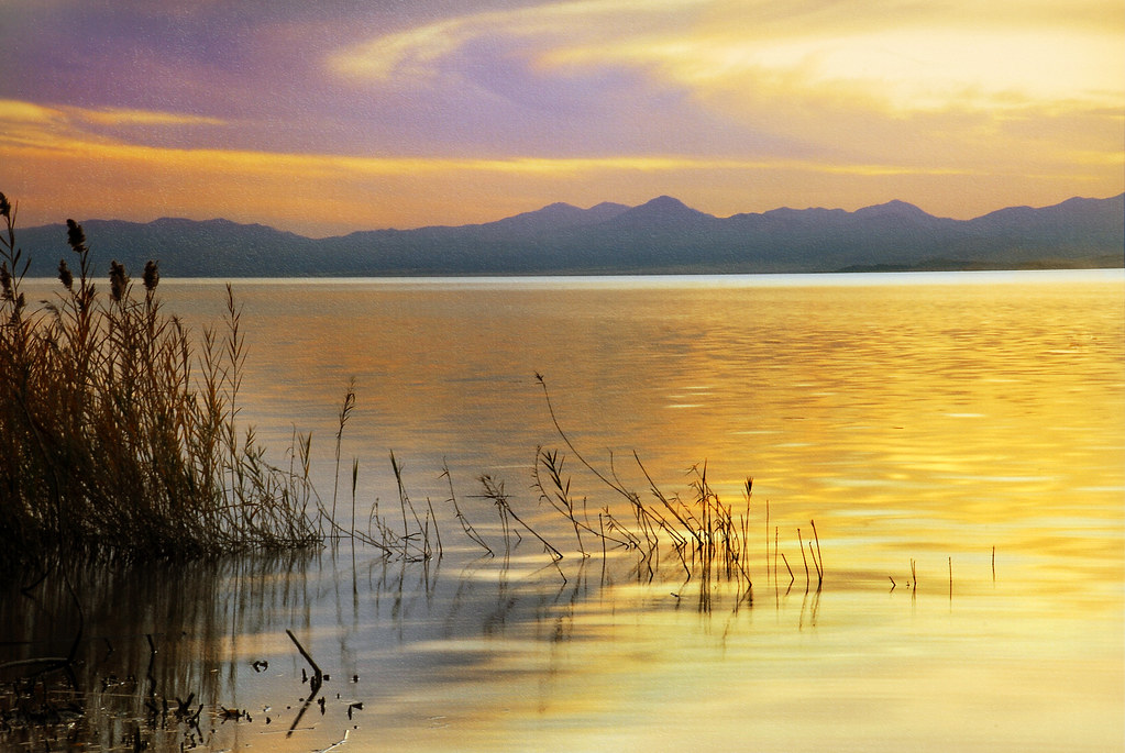 utah lake and reed purple colors texture