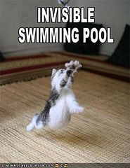 funny-pictures-cat-is-in-invisible-pool