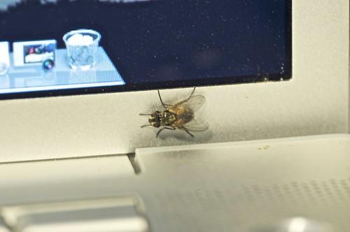 mosca informática