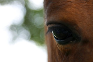 Horse watching