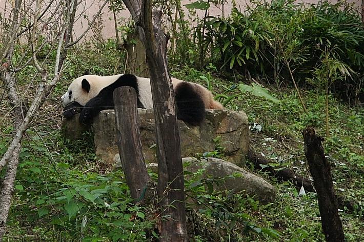 木柵動物園002