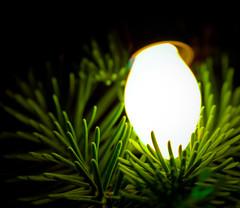 Christmas Light C7 (photomato) Tags: christmas xmas holiday tree bulb lights tn decoration trimming c9 c7