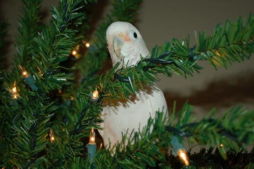 'Twas the night before Christmas 4178976394_92c0ef2ef4
