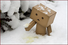 Danbo decided 2010 would be a good time to stop eating yellow snow! (hoho0482) Tags: snow pee yellow robot eat cardboard piss yellowsnow yotsuba danbo revoltech macromondays danboard