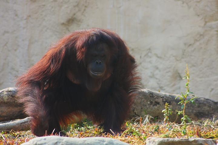 2010壽山動物園0015