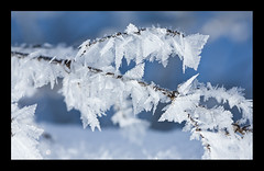 :Crystal Tips: (PhilB_PbArtWorks) Tags: winter macro ice canon boats dawn canal crystals january frosty 2010 narrowboats ellesmere canon100mmf28 philb pbartworks january2010winterellesmerecanalfrostydawnboatsnarrow bojanuary