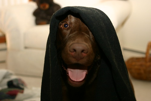 Darth Bailey