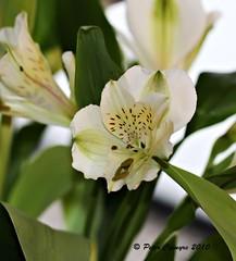 Flower Focus  1/25/10