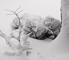 Snowscape B&W Housefront (moelynphotos) Tags: trees winter blackandwhite snow snowfall winterstorm snowyday snowscapes snowybranches whiteassnow moelynphotos