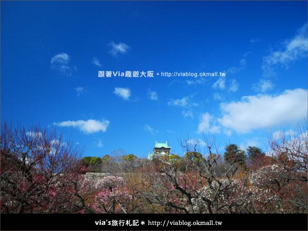 【via關西冬遊記】大阪城天守閣!冬季限定:梅園梅花盛開18