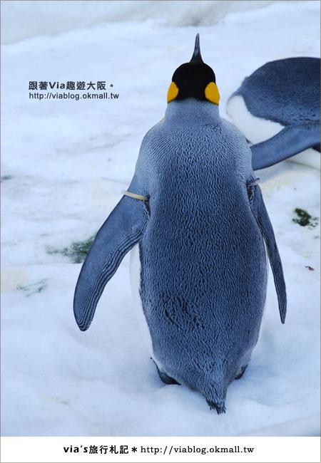 【via關西冬遊記】大阪海遊館~冬季限定!無敵可愛企鵝遊行來囉!8