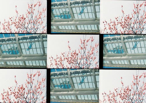 pale spring