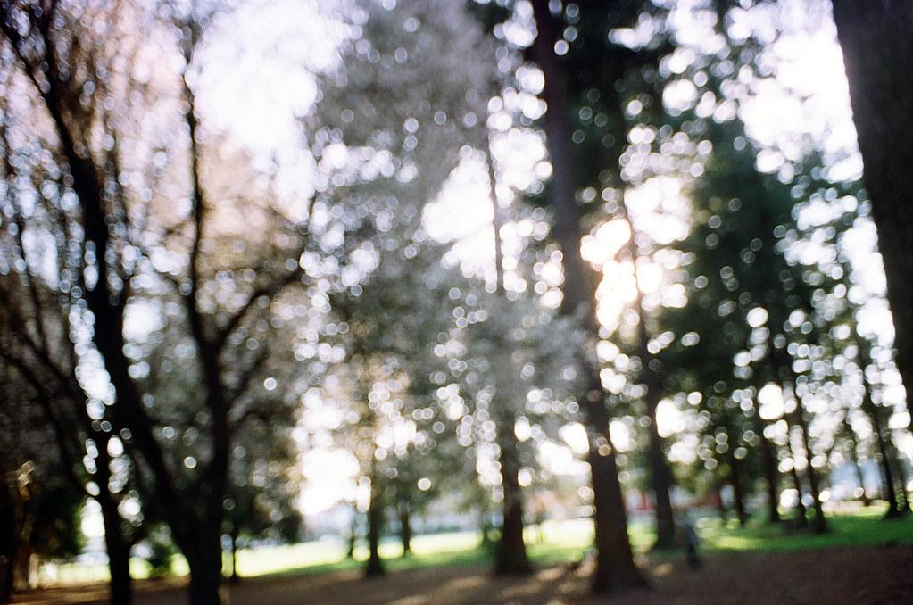 FuzzNTrees