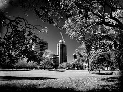 infrared adequacy #2 (mugley) Tags: park city trees sky urban blackandwhite bw 120 film grass leaves gardens rollei buildings mediumformat ir prime construction 645 shadows skyscrapers crane iso400 branches towers lawn australia melbourne wideangle victoria scan filter infrared epson 6x45 f8 r3 mamiya645 urbanlandscape westmelbourne flagstaffgardens 2s v700 mamiya645protl m645 rolleir3 cokinp007 35mmf35sekorn