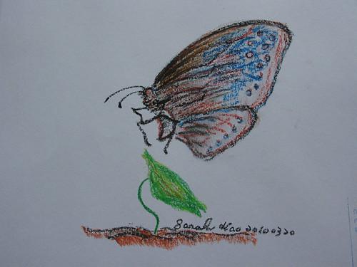 紫斑蝶季活動~莎拉的彩繪紫斑蝶