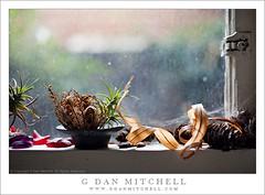 Brandon's Window Sill (G Dan Mitchell) Tags: life sanfrancisco california street city light red urban usa plant window ki