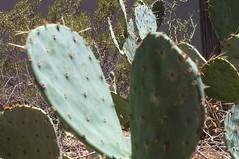 Saguaro National Park 05 (vortex.ef5) Tags: arizona saguaronationalpark