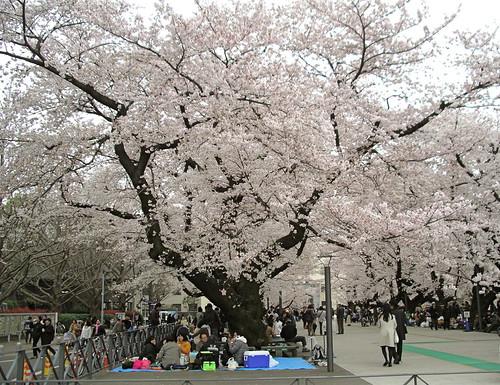 TIT Campus Sakura